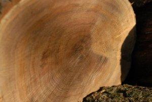 Свойства и применение доски из древесины дуба